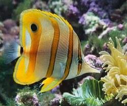 Рыбка в лабиринте