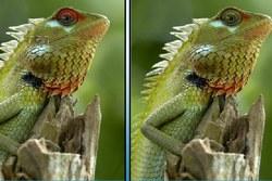 Wildlife: find differences (Живая природа: поиск отличий)