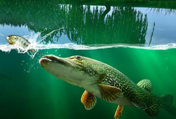 Рыбалка на щуку 2